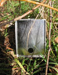 Longworth trap with shrew hole