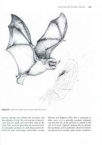 Bats: From Evolution to Conservation internal image