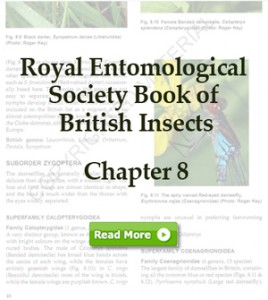 RES Book of British Insects sample chapter