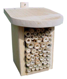 Beneficial Insect Box