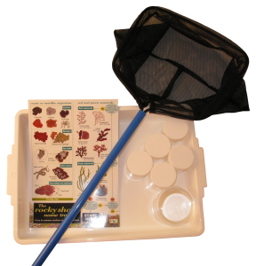 NHBS Educational Rock Pooling Kit