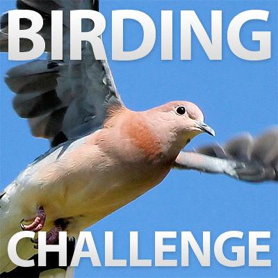 Instructables Birding Challenge