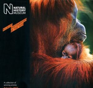 Wildlife Photographer of the Year 2013 Wall Calendar jacket image