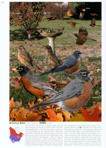 The Crossley ID Guide: Eastern Birds - plate