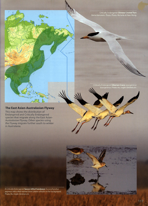 The East Asian-Australasian Flyway - The World's Rarest Birds page detail