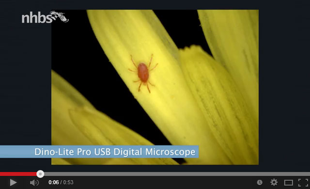 Video: Micro photography with the Dino-Lite digital microscope