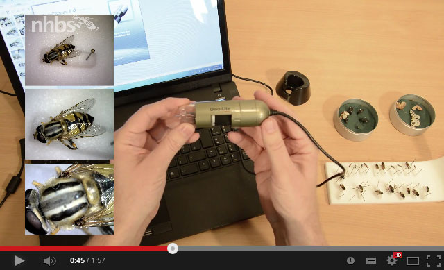 Video: Overview of a Dino-Lite digital microscope