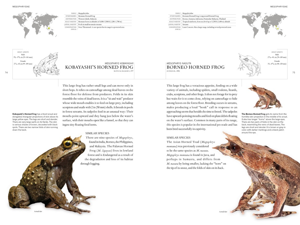 Book of Frogs internal image 1