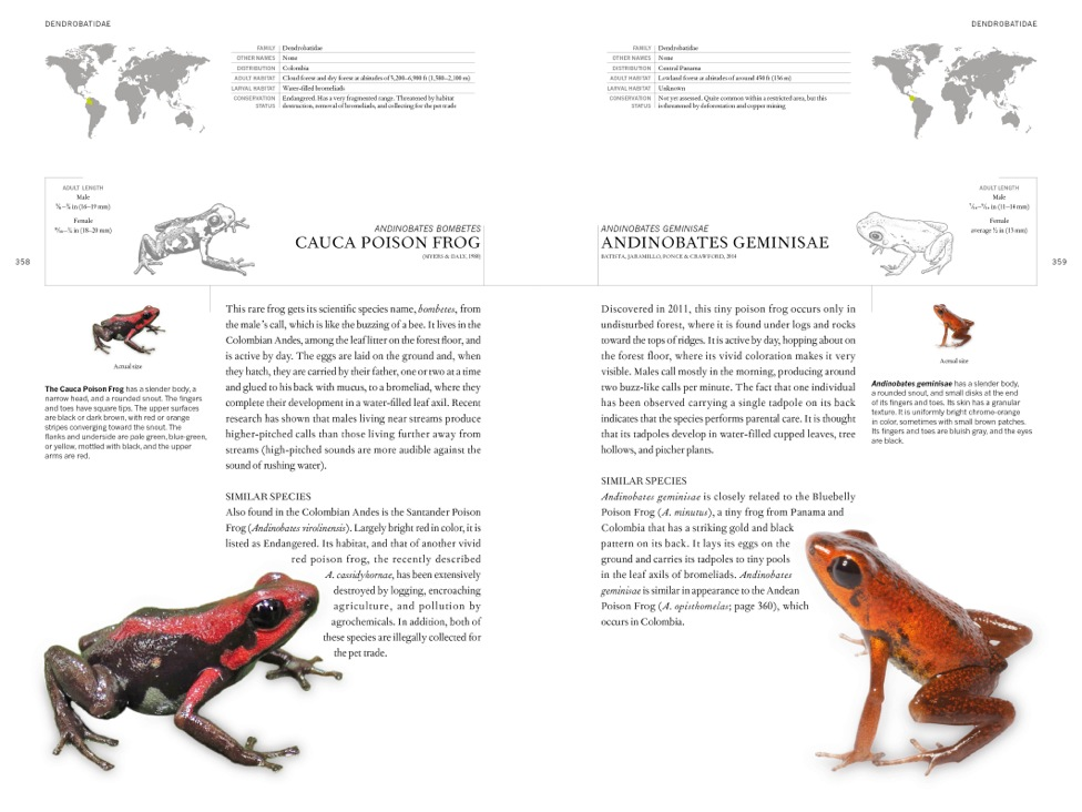 Book of Frogs internal image 2
