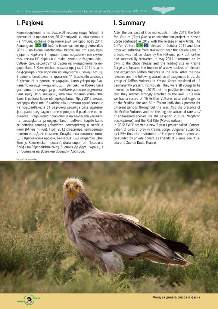 Reintroduction of Griffon Vulture Gyps fulvus in Kresna Gorge, Southwest Bulgaria 2010-2015