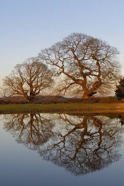Winter oak refelctions 01 (Image by Jim Champion, via Flickr Creative Commons license CC BY-SA 2.0)