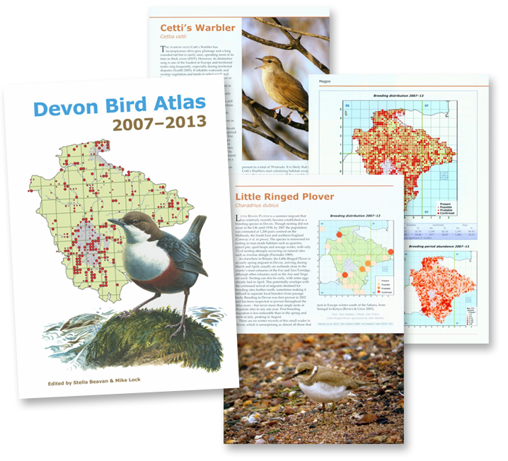 Devon Bird Atlas 2007-2013
