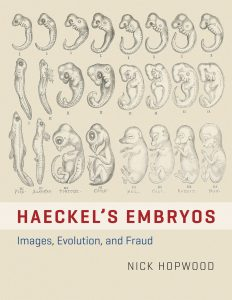 Haeckel's Embryos