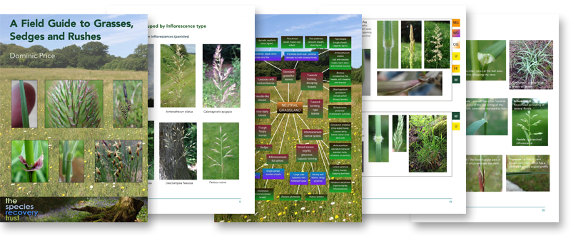 A Field Guide to Grasses, Sedges and Rushes