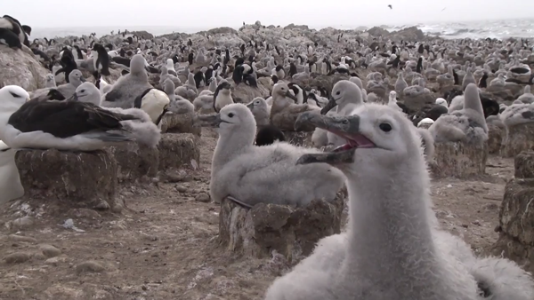 "Albatross: still from YouTube video ""Shipping 5350 books - one copy for every secondary school in the UK"""