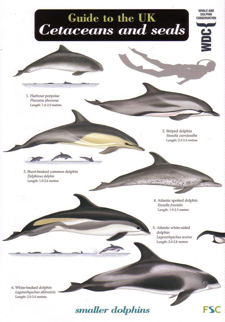 a study of the cetacea order It may be possible to use a study of patterns of correlations among morphological traits to test hypotheses of developmental links among organ (order: cetacea.