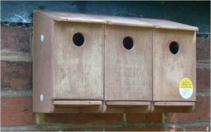 Sparrow Terrace Nest Box
