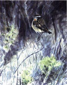 Whinchat, Blakeney by Richard Johnson