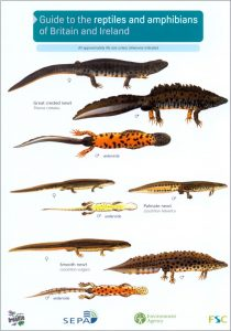 FSC Guide: Reptiles and Amphibians