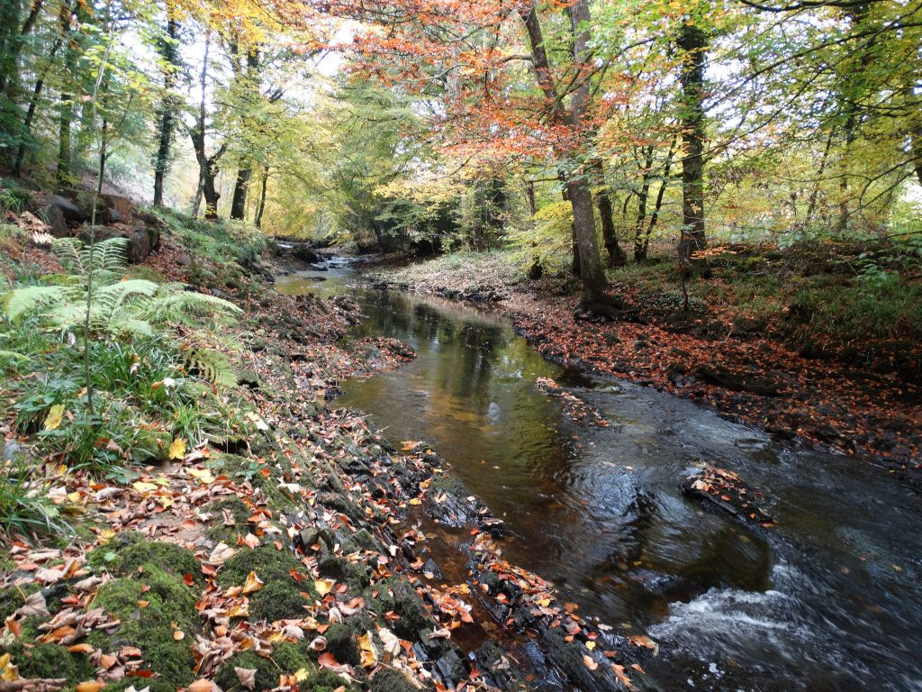 Stretch of the River Teign captured by Westcountry Rivers Trust via Flickr (CC BY 2.0).