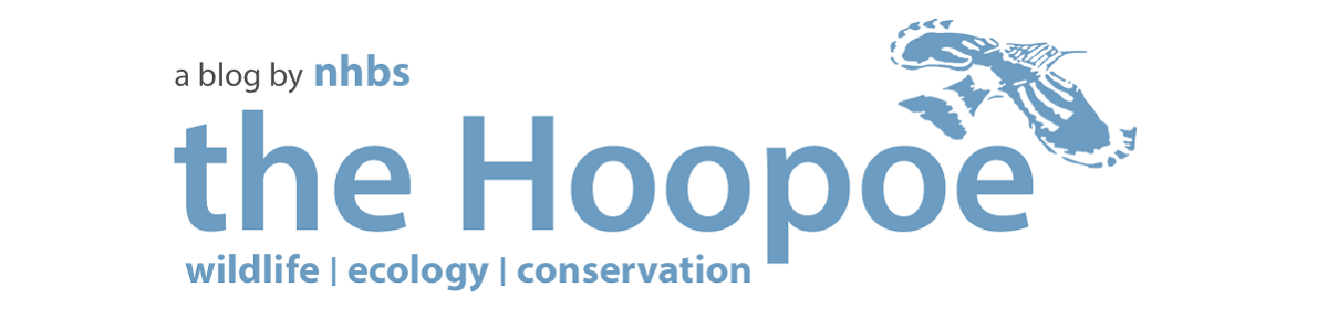 Hoopoe – A blog by nhbs