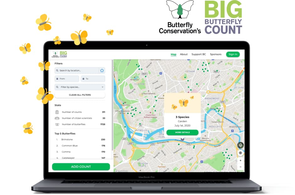 Take part in the Big Butterfly Count 2020